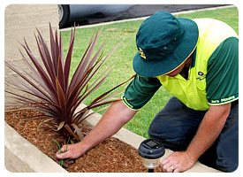 Garden Care & Maintenance Melbourne