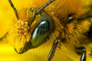 Honey Bee Care Up CLose