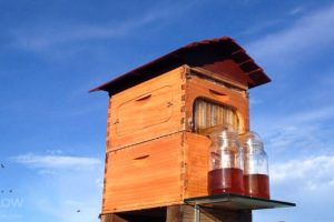 Honey Bee Care Flow Hive