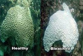 coral-bleaching-3