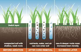 lawn-coring-2