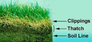 lawn-dethatching-1