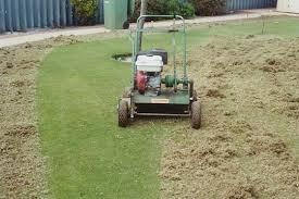 lawn-dethatching-2