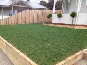 New Fescue Turf