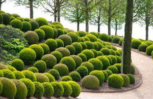 Topiary 5